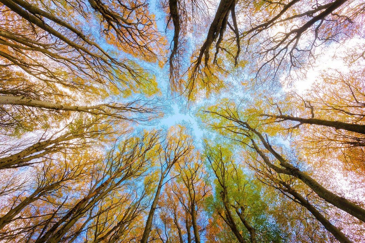 Bild von Bäumen